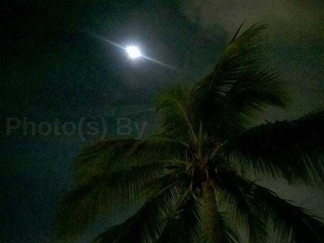"""Jeff Glovsky (Photo By) - """"Miami 2"""""""