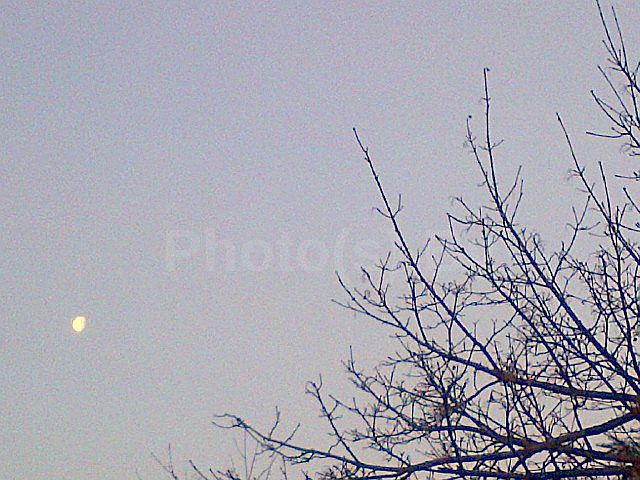 "Photo(s) by Jglo - ""New Morning Moon"""