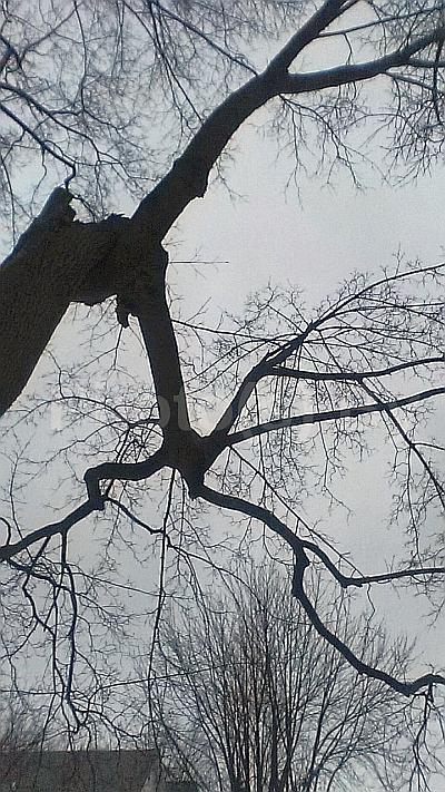 Photo(s) by Jglo - 'Winter Grey'